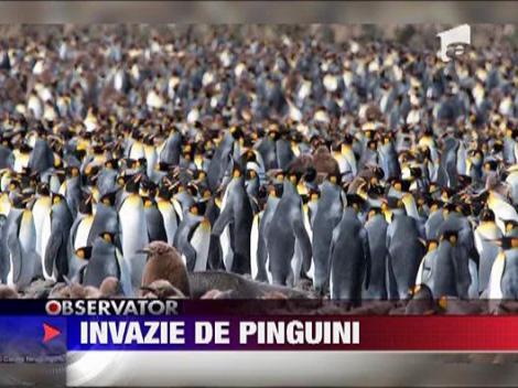 Invazie de pinguini pe insula St. George din Oceanul Atlantic