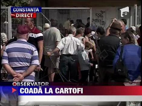 Sute de oameni stau la coada pentru a primi cartofii gratis in Navodari