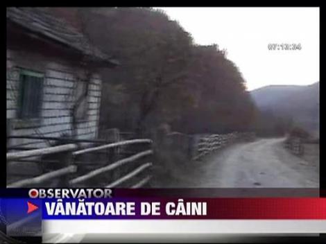 Caini vanati in Baia Mare