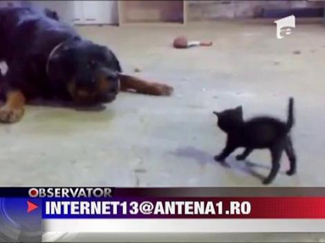 Pisica cu tupeu