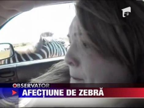 Turista atacata de zebra