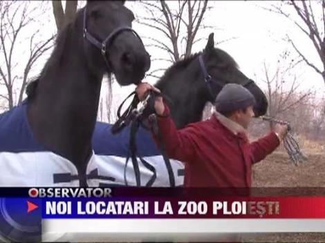 Gradina Zoologica din Bucov are locatari noi