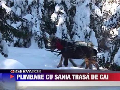Distractie la munte: Plimbare cu sania trasa de cai