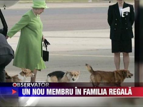 Familia regala britanica va avea un nou membru