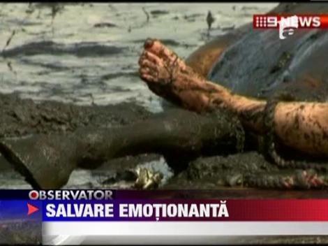 Salvare emotionanta in Australia