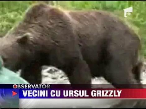 Vecini cu ursul grizzly