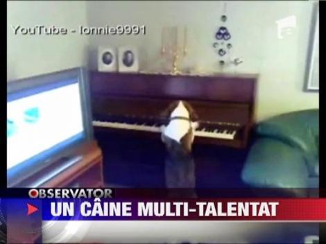 Un caine canta la pian