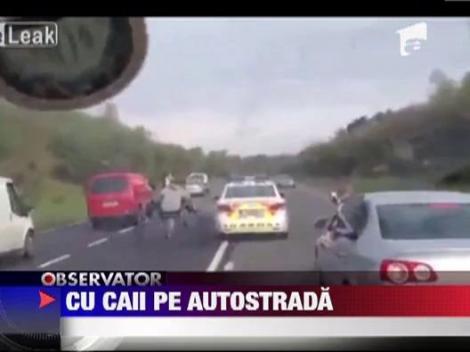 Cursa nebuna cu cai pe o autostrada din Irlanda