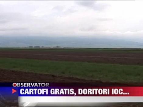 Harghita: Tone de cartofi din recolta de toamna putrezesc in depozite