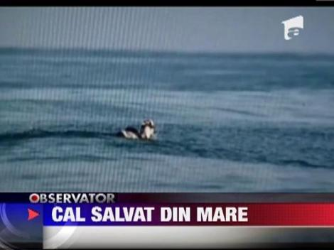 Cal salvat din mare