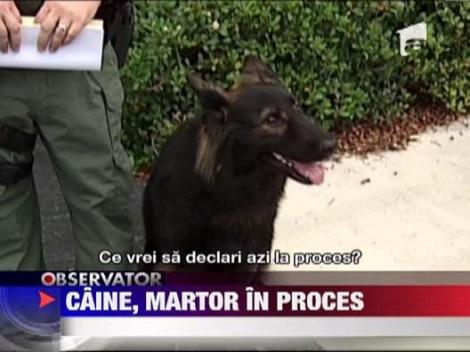 Caine, martor in proces