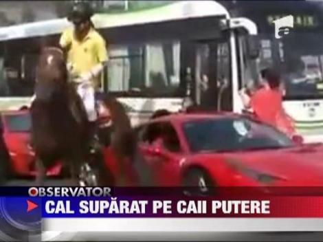 Un cal a lovit un Ferrari cu piciorul