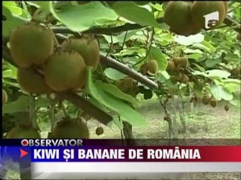 Kiwi, banane si curmale: fructe exotice care vor fi cultivate si in Romania