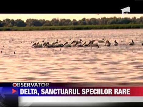 Delta Dunarii, sanctuarul speciilor rare