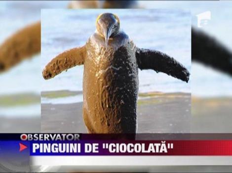 "Pinguini de ""ciocolata"""