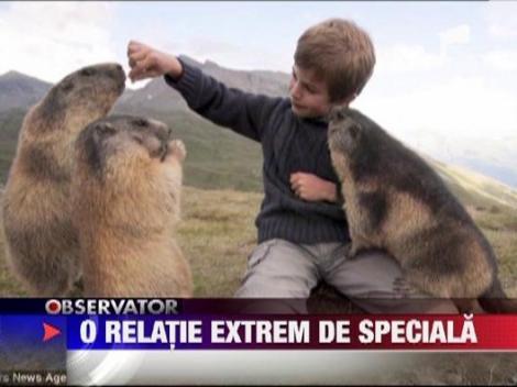 Mowgli exista: Un pusti britanic, prieten la catarama cu o colonie de marmote