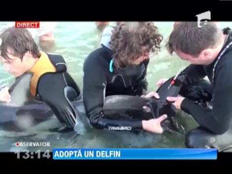 """Adopta un delfin"" - campania nationala de salvare a delfinilor din Marea Neagra"