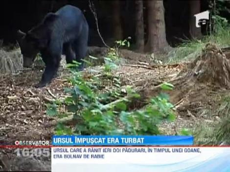 Alerta in Arges! Ursul impuscat era turbat