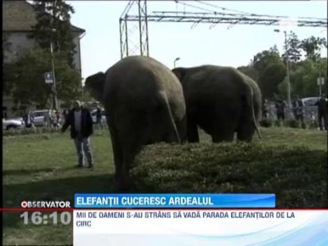 Spectacol inedit: Doi elefanti au reusit sa adune 2000 de oameni in centrul Clujului
