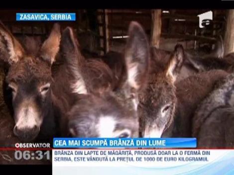 Cea mai scumpa branza din lume se gaseste intr-o rezervatie naturala din Serbia