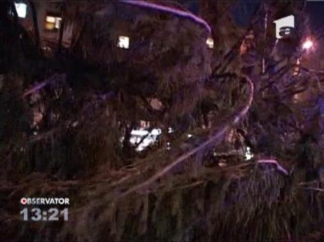 Cel mai mare pom de Craciun din tara, amplasat in Baia Mare