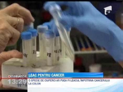 Ciupercile ar putea fi cheia vindecarii bolnavilor de cancer