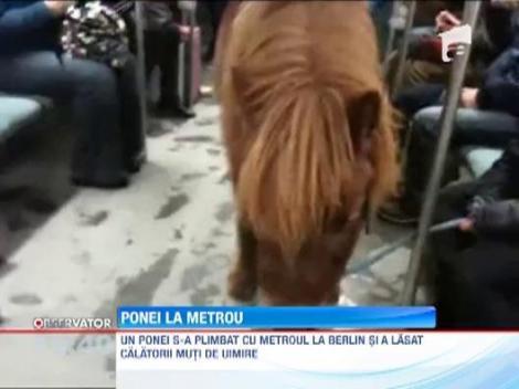 Un ponei s-a plimbat cu metroul la Berlin!