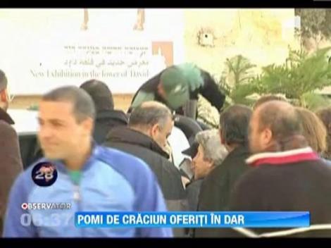 Crestinii din Ierusalim au primit in dar brazi. A fost dat startul festivitatilor de Craciun