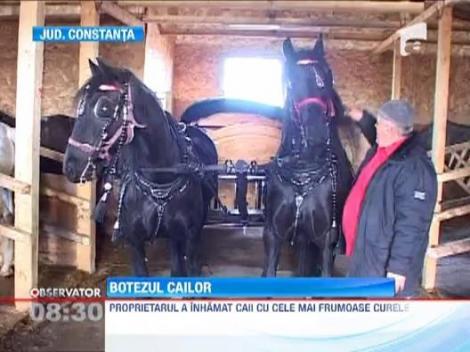 Traditie de Boboteaza: botezul cailor