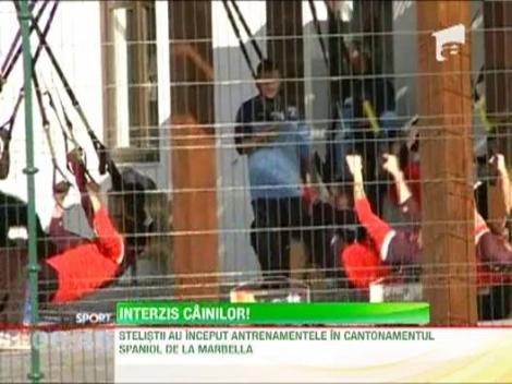 Stelistii au inceput antrenamentele la Marbella