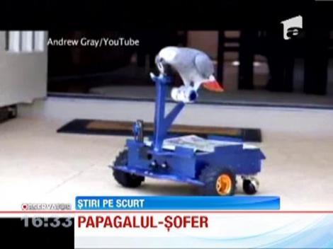 Un papagal din America a invatat sa conduca un vehicul