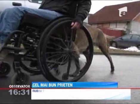 Un caine utilitar poate face diferenta in viata unei persoane cu dizabilitati