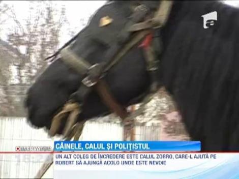 Calul, cainele si politistul. Zorro, Bebe si Robert fac dreptate in comuna constanteana Baraganu