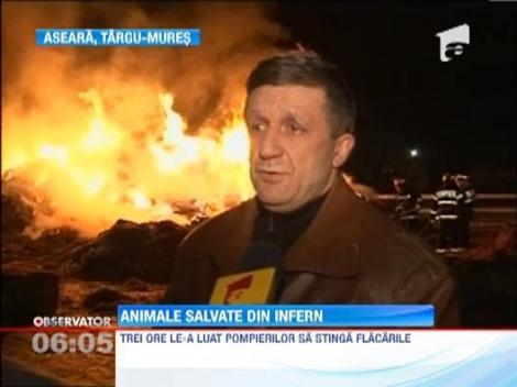 Zece cai din Lotul Olimpic al Romaniei au fost la un pas sa arda de vii! Un incendiu puternic a izbucnit la clubul de echitatie din Targu Mures