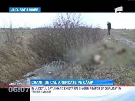 Peste 60 de cranii de cabaline, descoperite pe un camp din judetul Satu Mare