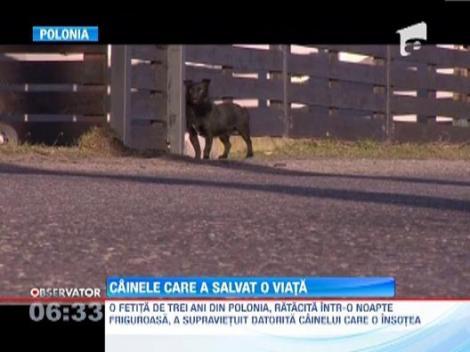 O fetita din Polonia, ratacita in padure intr-o noapte friguroasa, a supravietuit datorita cainelui care o insotea