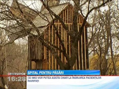 Un spital modern pentru pasari va fi infiintat la Muzeul Satului din Bucuresti