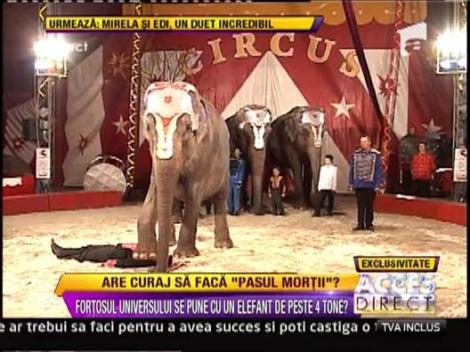 """""""Pasul mortii"""", un elefant aproape isi calca in picioare dresorul!"""