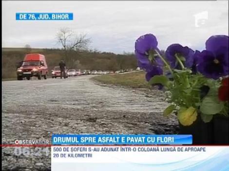 Drumul European 76: 500 de soferi au plantat flori in craterele din asfalt