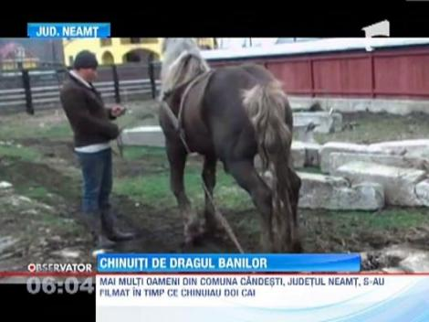IMAGINI SOCANTE! Cai torturati la targul de animale din Neamt