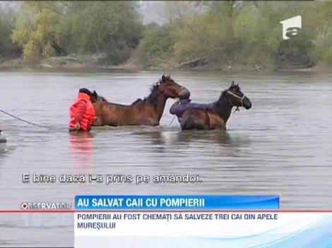 Partida spectaculoasa de pescuit, pe Mures! Pompierii din Deva au fost chemati sa scoata din apa trei cai