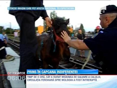 Un cal a ramas blocat intre traversele unui pod feroviar