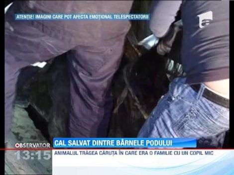 IMAGINI SOCANTE! / Cal salvat dintre barnele podului