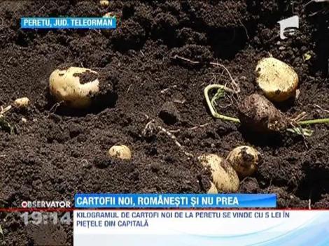 Cartofii noi romanesti, vechea escrocherie a intermediarilor din piete
