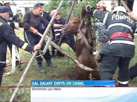 Un cal a fost salvat de la moarte sigura de 10 pompieri