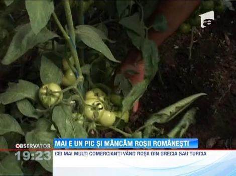 Matca legumelor romanesti exporta tone de castraveti in Polonia