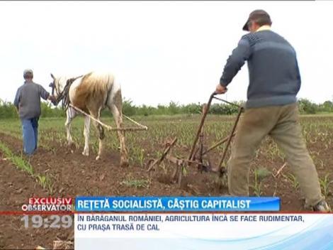 Agricultura in Romania se face inca rudimentar, cu prasa trasa de cal