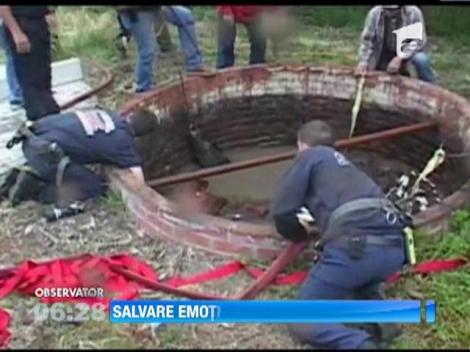 Zeci de localnici din California au salvat un cal care a cazut intr-un put de sase metri