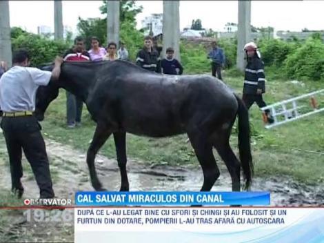 Interventie la limita a pompierilor din Arges. Un cal, salvat miraculos dintr-un canal