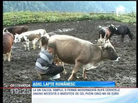 Lapte romanesc, in pericol de a nu mai putea fi comercializat
